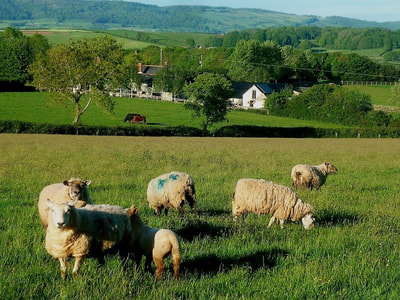Farm holidays at Middle Stone Farm. Glamping and holiday cottages, come for a farm stay.